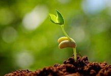 Top 8 địa điểm bán hạt giống hoa uy tín chất lượng tại TPHCM