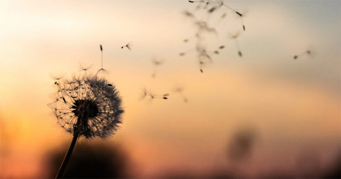 Top 20 bài văn mẫu phân tích Vội vàng của Xuân Diệu hay nhất hiện nay
